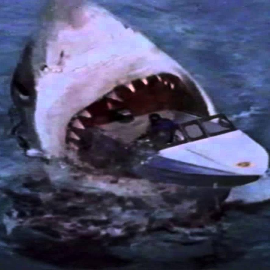 Gute Haifilme